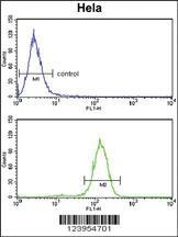 Anti-BCL3 Rabbit Polyclonal Antibody