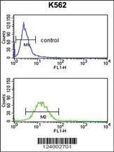 Anti-GPR50 Rabbit Polyclonal Antibody