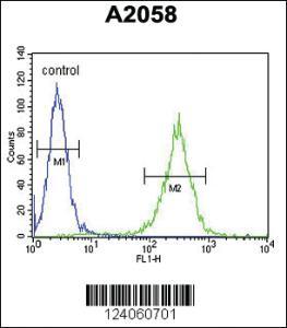 Anti-HSD17B12 Rabbit Polyclonal Antibody