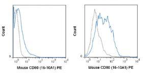 Anti-CD80 Armenian Hamster monoclonal antibody PE (Phycoerythrin) [clone: 16-10A1]