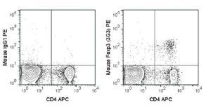 Anti-FOXP3 Mouse monoclonal antibody PE (Phycoerythrin) [clone: 3G3]