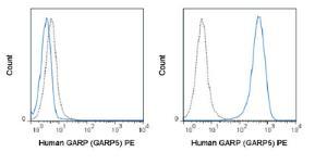 Anti-LRRC32 Mouse monoclonal antibody PE (Phycoerythrin) [clone: GARP5]