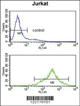 Anti-CSPP1 Rabbit Polyclonal Antibody