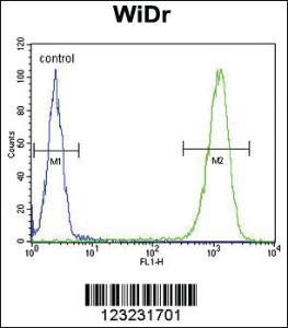 Anti-TSPAN33 Rabbit Polyclonal Antibody