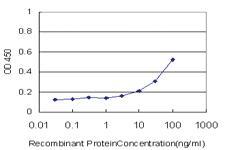 Anti-TDO2 Mouse Monoclonal Antibody