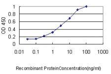 Anti-AKAP12 Mouse Monoclonal Antibody