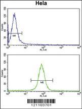 Anti-CALM1 Rabbit Polyclonal Antibody