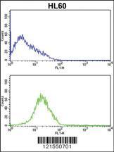 Anti-SERPINB7 Rabbit Polyclonal Antibody