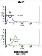 Anti-OLIG3 Rabbit Polyclonal Antibody