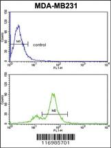 Anti-CYP2A13 Rabbit Polyclonal Antibody
