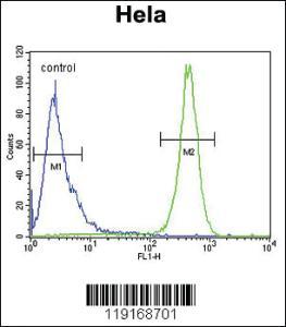Anti-BECN1 Rabbit Polyclonal Antibody