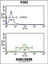 Anti-RAB7A Rabbit Polyclonal Antibody