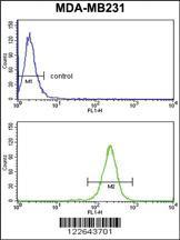 Anti-NCF1C Rabbit Polyclonal Antibody