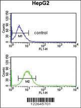 Anti-ECI2 Rabbit Polyclonal Antibody