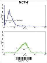 Anti-DERL2 Rabbit Polyclonal Antibody