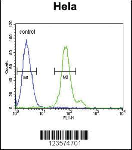 Anti-CTPS2 Rabbit Polyclonal Antibody
