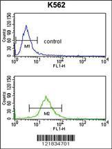 Anti-SLC3A1 Rabbit Polyclonal Antibody