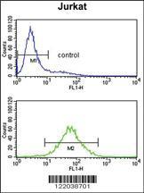 Anti-CCR3 Rabbit Polyclonal Antibody