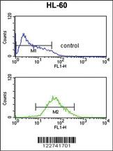 Anti-ADCY8 Rabbit Polyclonal Antibody