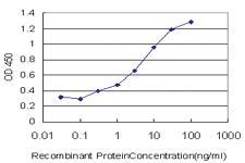 Anti-ANXA10 Mouse Monoclonal Antibody