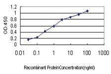 Anti-APOA2 Mouse Monoclonal Antibody