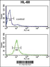Anti-CYP51A1 Rabbit Polyclonal Antibody