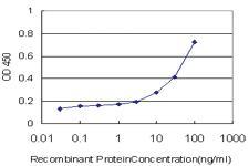 Anti-ARHGEF1 Mouse Monoclonal Antibody