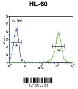 Anti-B4GALT1 Rabbit Polyclonal Antibody