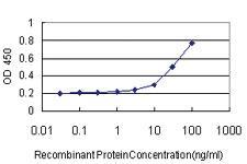 Anti-B3GALT2 Mouse Monoclonal Antibody