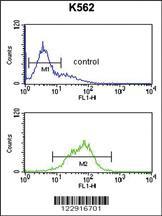 Anti-KIR2DL5B Rabbit Polyclonal Antibody