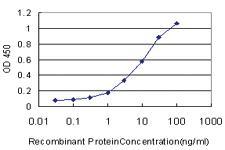 Anti-BAAT Mouse Monoclonal Antibody