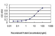 Anti-BRMS1 Mouse Monoclonal Antibody