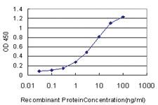 Anti-BSCL2 Mouse Monoclonal Antibody