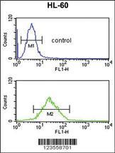 Anti-LY75 Rabbit Polyclonal Antibody