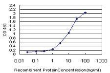 Anti-CCL15 Mouse Monoclonal Antibody
