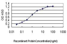 Anti-CDKL4 Mouse Monoclonal Antibody