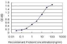 Anti-CHST11 Mouse Monoclonal Antibody