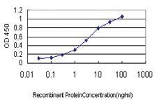 Anti-CMTM4 Mouse Monoclonal Antibody