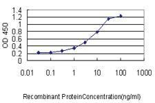 Anti-CMTM5 Mouse Monoclonal Antibody