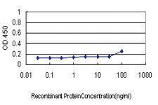Anti-COX6C Mouse Monoclonal Antibody