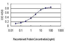 Anti-CREBBP Mouse Monoclonal Antibody