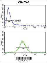 Anti-E2F5 Rabbit Polyclonal Antibody