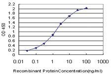 Anti-CUX1 Mouse Monoclonal Antibody