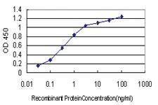 Anti-CYP46A1 Mouse Monoclonal Antibody