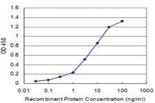 Anti-DBP Mouse Monoclonal Antibody