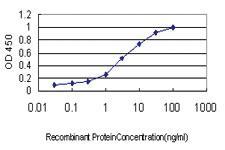 Anti-DPYS Mouse Monoclonal Antibody