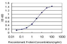Anti-E2F4 Mouse Monoclonal Antibody