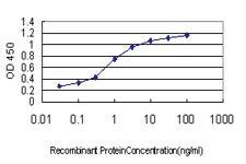 Anti-EFNA5 Mouse Monoclonal Antibody