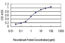 Anti-EIF5A2 Mouse Monoclonal Antibody