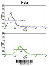Anti-CLASP2 Rabbit Polyclonal Antibody
